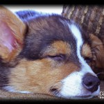 Endearing things about puppies