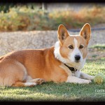 Nikita Weighs In and Concern Over Corgi Ears