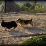 Corgi Play - Dockers & Cody