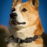 Heartfelt appreciation from Corgi Tales
