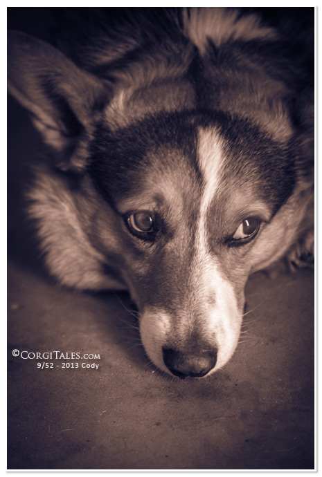 Cody - Thinking.  from CorgiTales.com