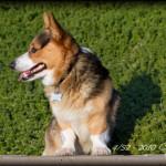 """52 Weeks: 4/52 - Cody """"Profiles"""""""