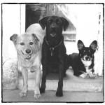 Flashback: Our First Furkid Trio - Nike, Puma & Dockers