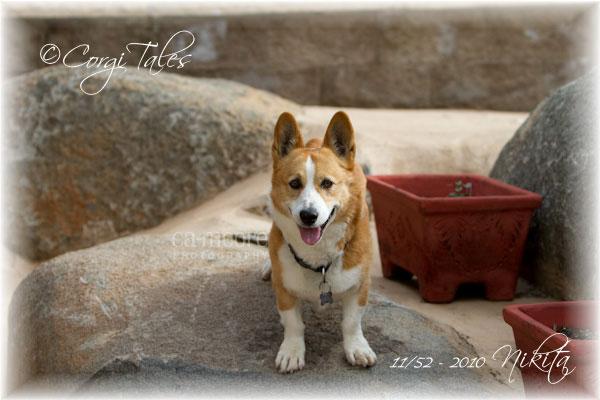 Nikita: Rock Dog