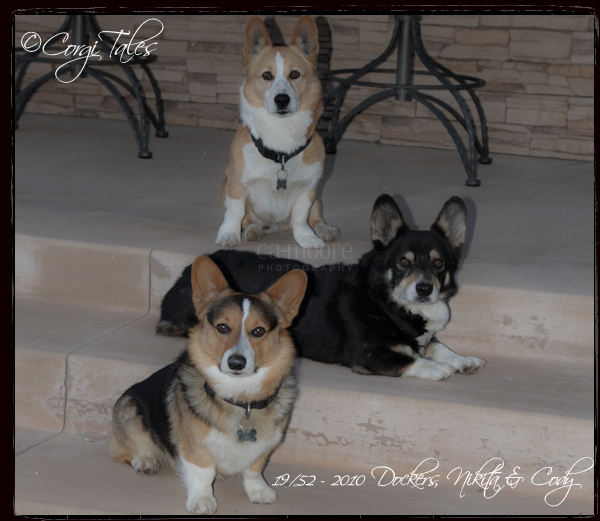 Pack Of Corgis