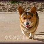 Cody - The Walk