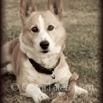 Nikita - Canis lupis familiaris II