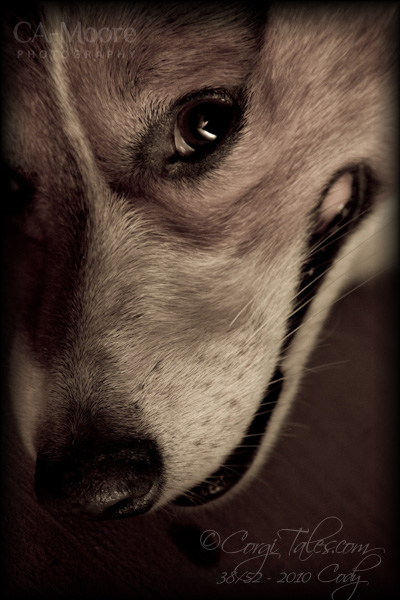 Beauty of a Dog, v3