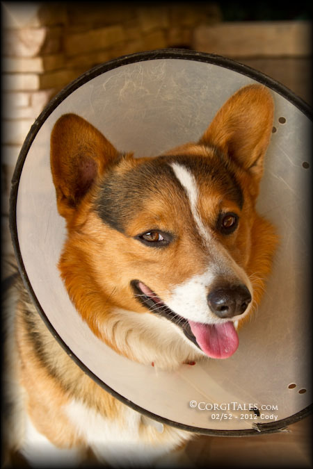 """Cody Escapes into the """"Cone Of Shame"""""""