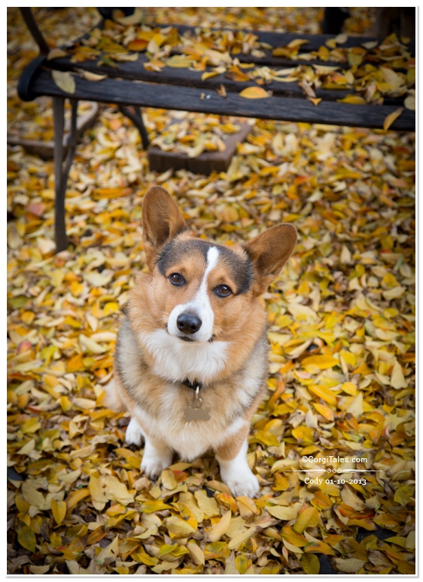 Cody from CorgiTales.com