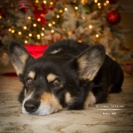 Season's Greetings from Corgi Tales