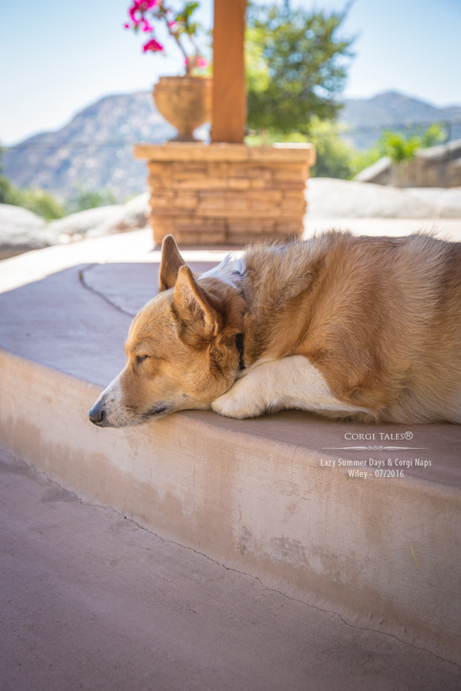 Lazy Summer Days and Corgi Naps: Wiley - Corgi Tales